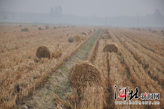 /enpproperty-->   河北新闻网(王秋耕、李亚梅、葛西劝)6月19日,安国市郑章镇郑章村的麦田里小麦秸秆打捆机正在紧张的忙碌着。近年来,安国市在三夏禁烧秸秆的同时,积极为小麦秸秆找出路,为农民和企业间前线搭桥,引进先进的小麦秸秆打捆机,为造纸厂提供优质生产原料,变废为宝,在农民受益的同时也从根本上解决了秸秆禁烧难题。
